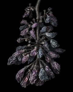 Nobel-Rot-6-photograph-by-Peter-Lippmann